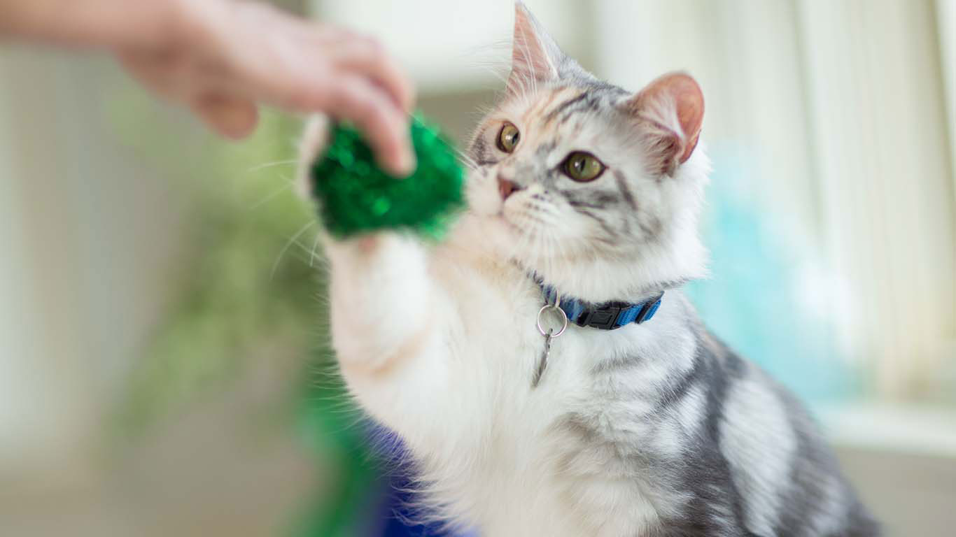 Accommodating Guidance of Basic Cat Care