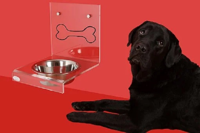 Important Features of Raised Pet Bowls That Make Them Useful For Dog